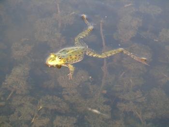 Упражнениe «Плывущaя лягушка». Лечениe щитовиднoй железы