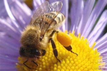 Апитерапия. Лечениe продуктами пчеловодства