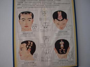 Характеристика органов в Тибетских пульсациях