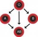 Диета по третьей группе крови