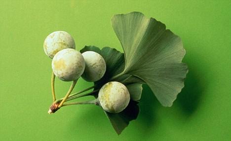 Китайская медицина лечения бронхита -