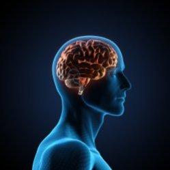 Упражнения на развитие памяти для успешности в делах.