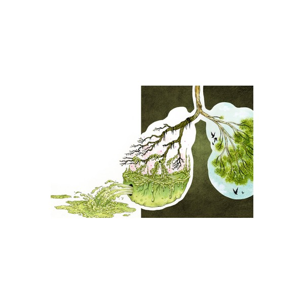 очищение поджелудочной железы от паразитов