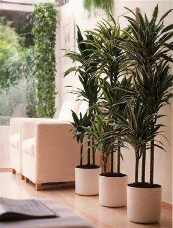 Фен-шуй: энергетика домашних растений